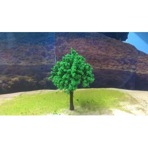 Fig Tree For Forest Medium height